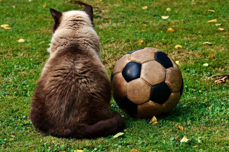 Weirdest Football Matches in History